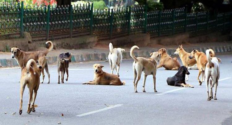 दिल्ली: कुत्तों की बेरहमी से हत्या करने वालों की तलाश जारी