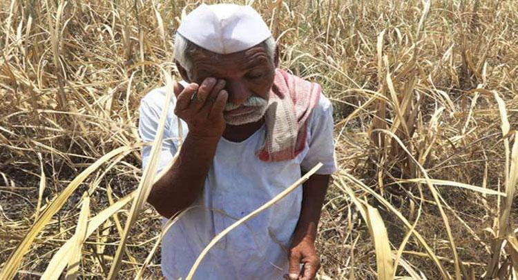 अब देश के अन्नदाताओं पर मंडराया ये संकट, हो सकता है 3600 करोड़ का नुकसान