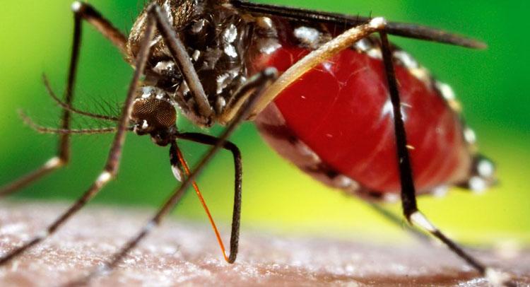 बारिश के बाद डेंगू के 28 संदिग्ध मामले आए सामने