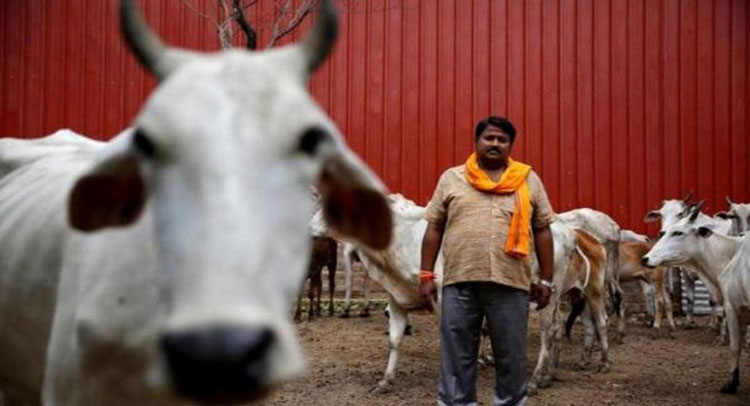 केरल : कांग्रेस को गो-हत्या जैसे 'सियासी पाप' की कीमत चुकानी पड़ेगी !
