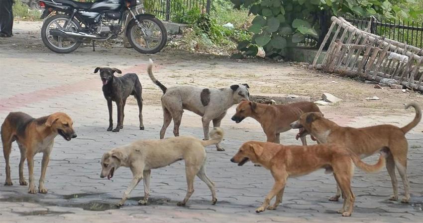 देश में बढ़ रहा आवारा कुत्तों का उत्पात पंजाब में ही प्रतिदिन 300 लोग हो रहे शिकार