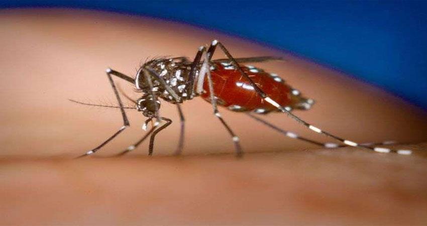 प्रदूषण के बाद अब डेंगू फैला रहा राजधानी में पांव, 4 लोगों की मौत