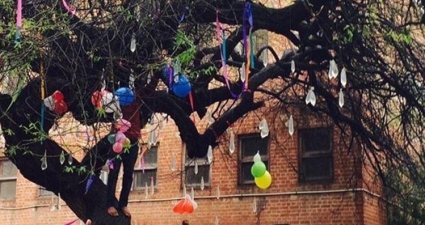 हिंदू कॉलेज में एबीवीपी और एसएफआई के बीच झड़प, वर्जिन ट्री की पूजा को लेकर मचा हंगामा
