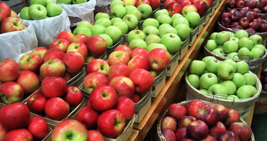 ईरानी सेब की घटी आवक से किसान फायदे में, अब और महंगा होगा सेब