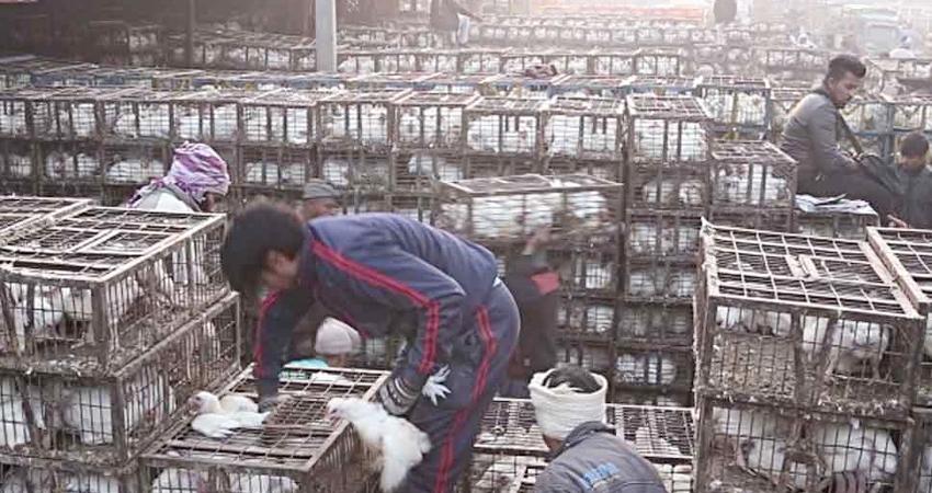 गाजीपुर मंडी में धड़ाधड़ बिकने शुरू हुए मुर्गे, थोक खरीदारों का लगा तांता