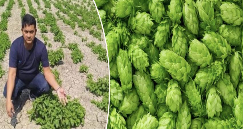 बिहार का किसान उगा रहा दुनिया की महंगी Vegetable, कीमत जानकर उड़ जाएंगे होश