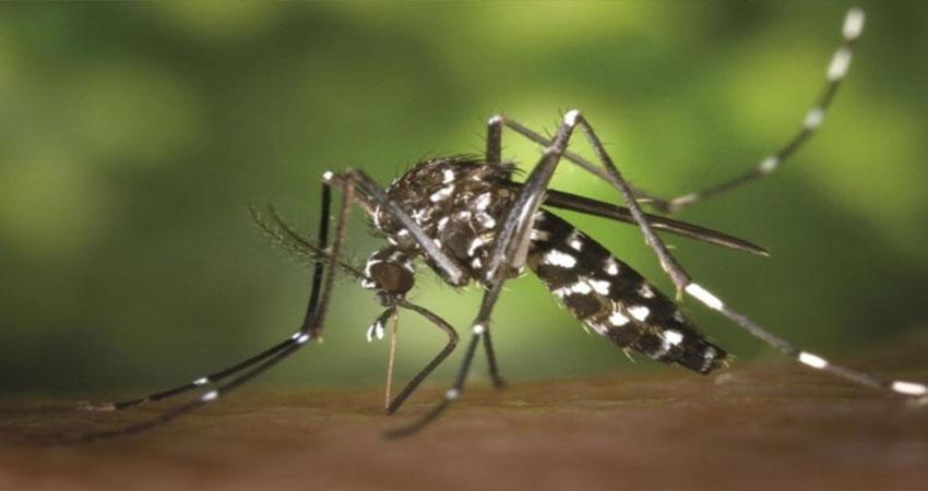 मौसम में बदलाव के बाद भी राजधानी को नहीं राहत, पहले प्रदूषण अब डेंगू का बरसा कहर