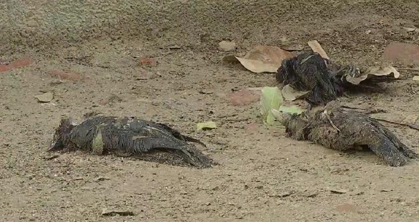 दिल्ली में बर्ड फ्लू की दस्तक! मयूर विहार के सेंट्रल पार्क में अब तक 200 कौओं की मौत