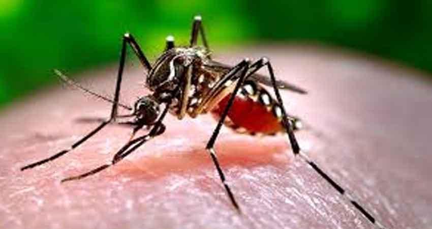 डेंगू व मलेरिया की टीम भी कोरोना को थामने में जुटी, डेंगू की रोकथाम का काम हुआ ठप्प
