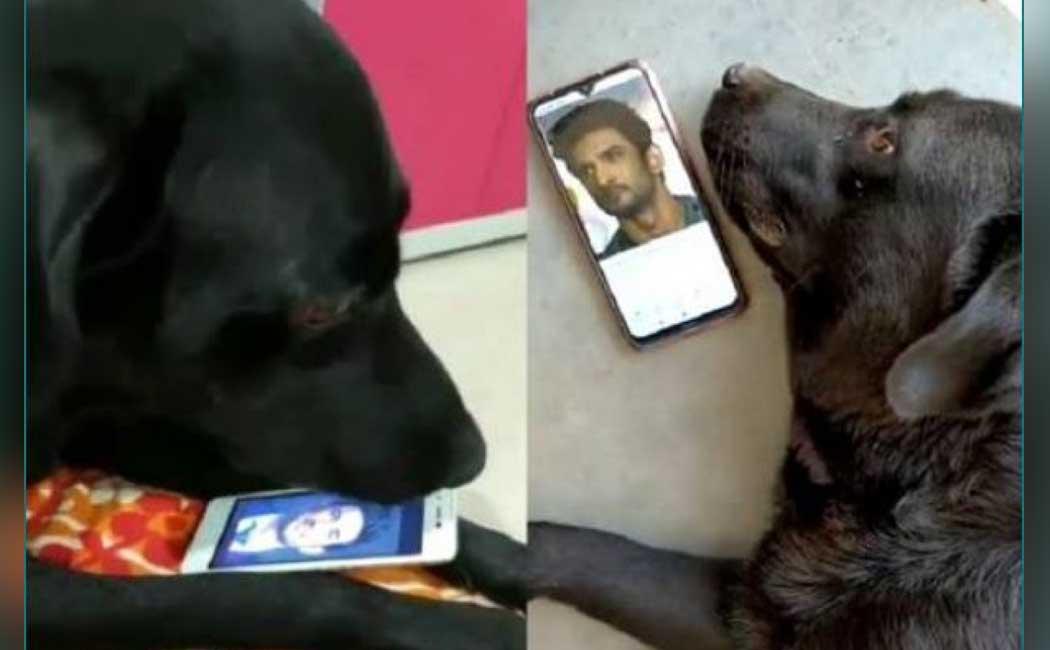 Pic: सुशांत की मौत के बाद सदमे में है उनका doggy, खाना-पीना छोड़ देख रहा उनकी तस्वीरें