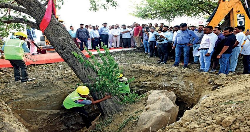 दिल्ली में पेड़ कटेंगे नहींं शिफ्ट होंगे, केजरीवाल सरकार लाई Tree Transplantation पॉलिसी