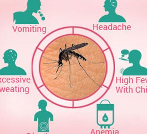 मलेरिया जैसी गंभीर बीमारी को एनोफ़िलीज़ देती है जन्म, ये...