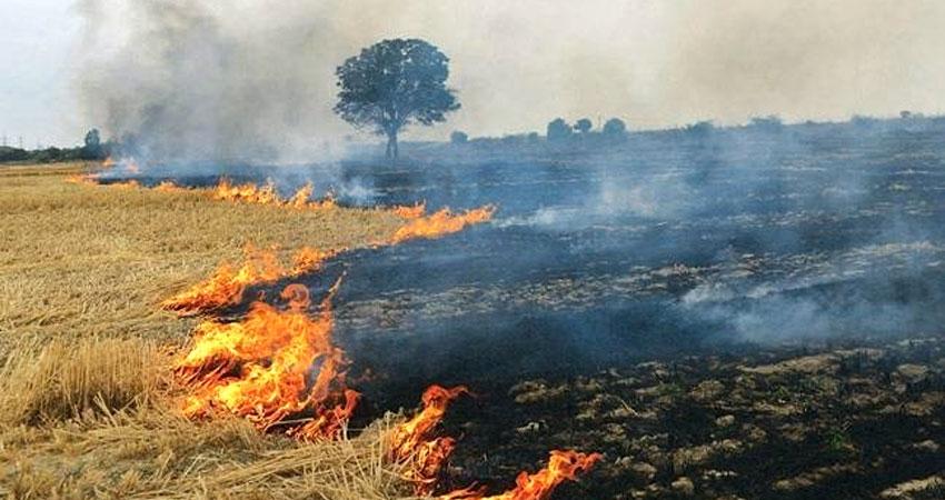 खेतों में नाड़ (पराली) जलाने सेबढ़ेगा लोगों के फेफड़ों के लिए खतरा