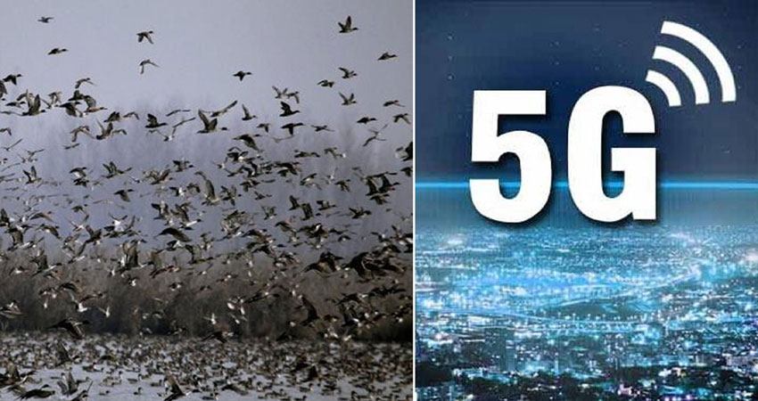 सही साबित हुई अक्षय कुमार की 2.0 मूवी की ये बात, 5G आया तो होगा बड़ा नुकसान