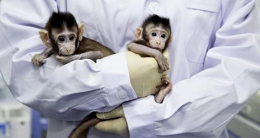 कोरोना वैक्सीन का बंदरों पर ट्रायल हुआ सफल, अब ह्यूमन ट्रायल का इंतजार