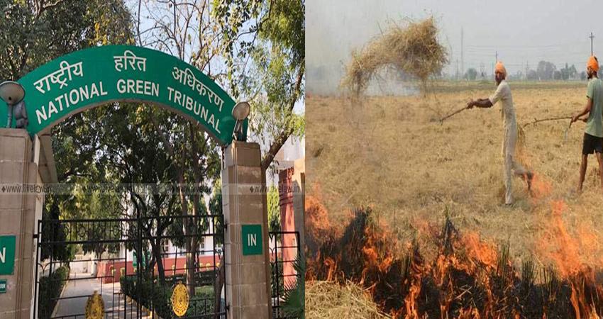 पराली जलाने पर NGT सख्त! यूपी, पंजाब और हरियाणा से मांगी रिपोर्ट