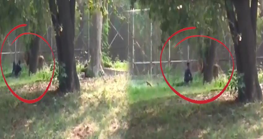 दिल्ली: शेर के बाड़े में कूदा शख्स, खेलते हुए वीडियो हुआ वायरल