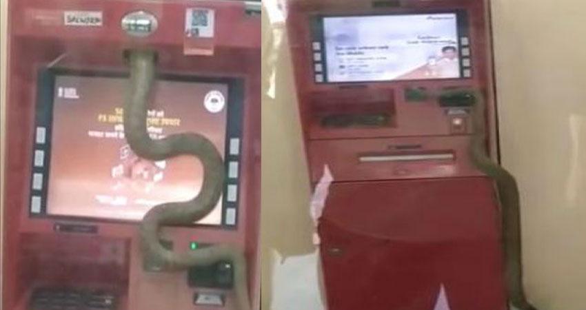 जब ATM में इंसान की जगह दिखाई दिया सांप, इलाके में मचा हड़कंप