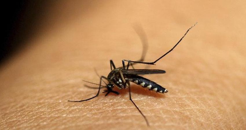 #WorldMalariaDay: जब दिखें मलेरिया के ये लक्षण तो डॉक्टरों से जरूर ले सलाह