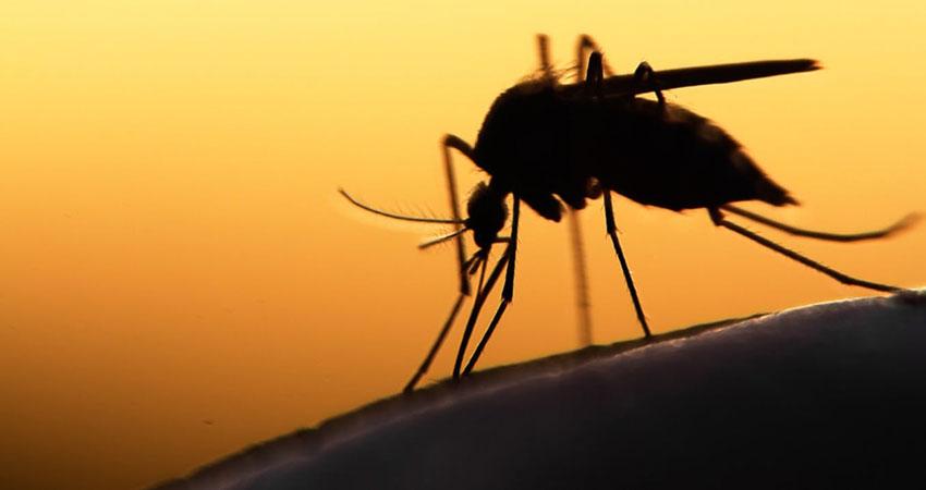 ...तो इस तकनीक से यौन संबंध बनाने पर मर जाएंगे मलेरिया के मच्छर