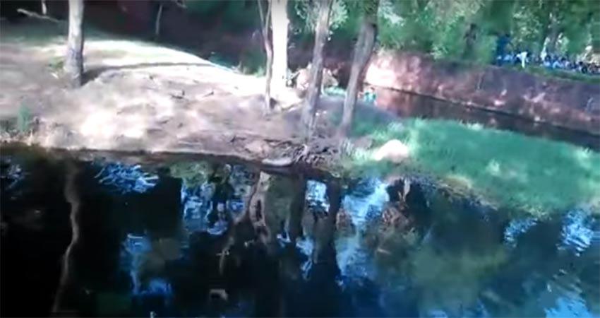 नशे में धुत शेर को KISS करने पिंजरे के अंदर पहुंचा शख्स, वीडियो viral