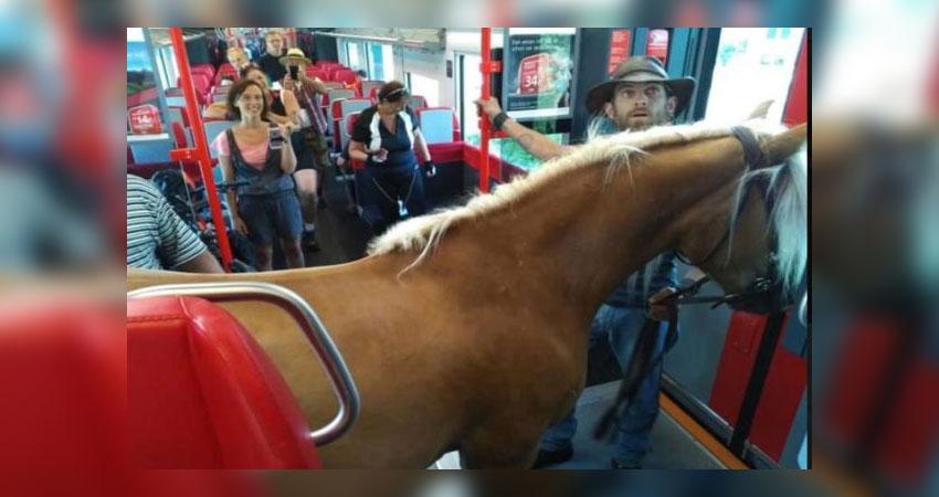 ट्रेन में घोडे़ के साथ चढ़ा युवक, यात्रियों में मची अफरा- तफरी