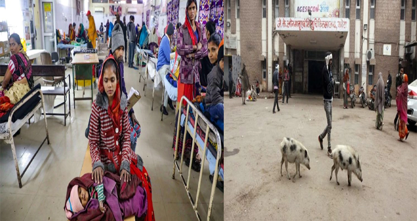 राजस्थान: 107 बच्चों की मौत पर हुआ बड़ा खुलासा- डॉक्टर की जगह अस्पताल में घूम रहे थे सुअर