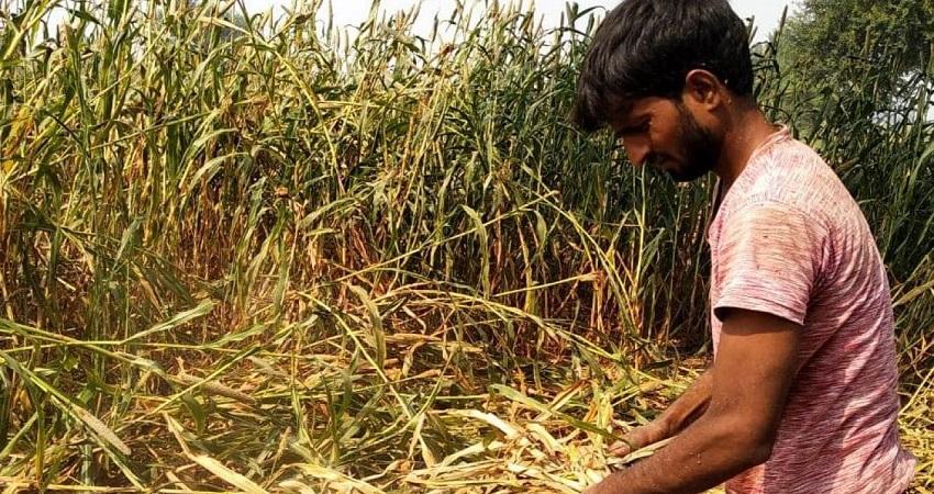 जिस खेत में पीड़ित के साथ हुई वारदात, किसान की फसल हुई बर्बाद, कर रहा मुआवजे की मांग