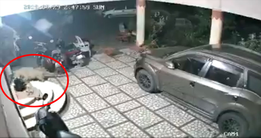 घर में अचानक घुस आया तेंदुआ उसके बाद जो हुआ, देखें Video
