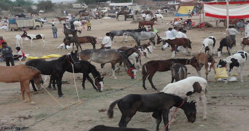 दिवाली पर लगा गधों का मेला, सलमान-शाहरूख की  लगती है लाखों में बोली