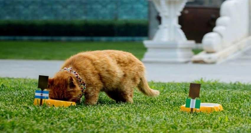 नहीं रही विश्व कप के मैचों की सटीक भविष्यवाणी करने वाली बिल्ली