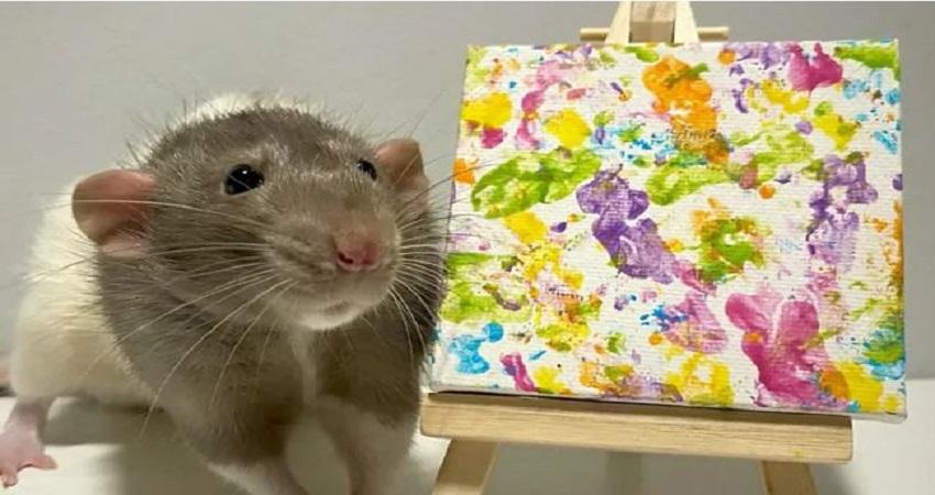 सोशल मीडिया पर वायरल हुआ ये कलाकार चूहा, खाते हुए करता है कमाल की पेंटिंग