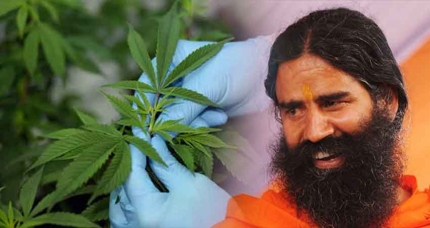 कानूनी तरीके से भारत में गांजा और भांग बेचना चाहते हैं बाबा रामदेव!