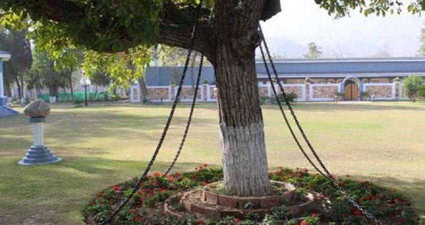 121 वर्षों से कैद है यह पेड़, नहीं मिल रही मुक्ति