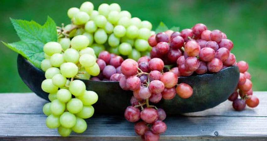 अंगूर खाने से ठीक होगा Cancer, इन चीजों से भी मिल सकते हैं फायदे