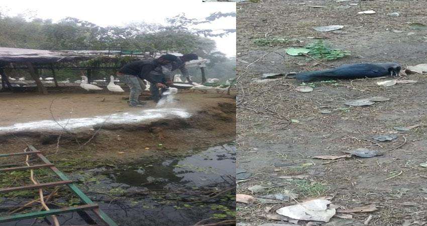 दिल्ली में बर्ड फ्लू: लालकिला व जंतर-मंतर पर भी मिले मृत पक्षी