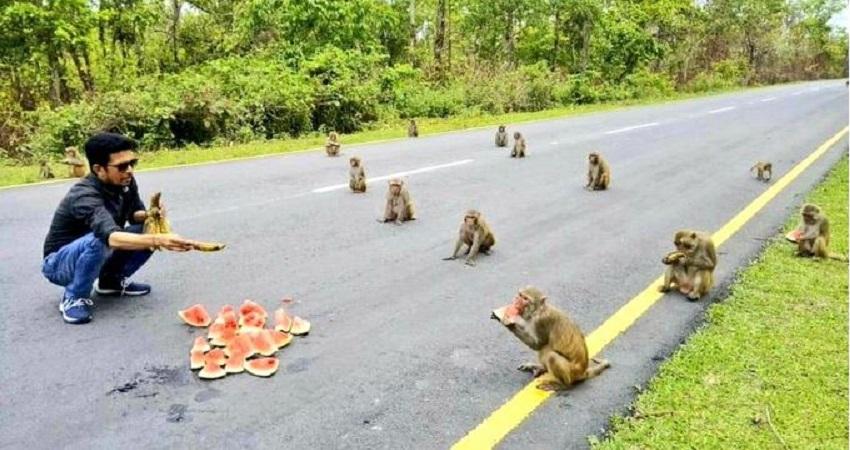 बंदरों पर शोध कर वैज्ञानिकों ने समझा महामारी में क्यों जरुरी है सोशल डिस्टेंसिंग का फंडा