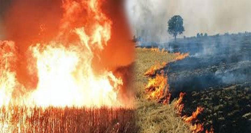 आग ने बरपाया किसानों पर कहर, हजारों बीघा की खड़ी फसल हुई राख