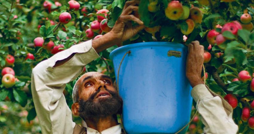 कश्मीर में सेब खरीद को लेकर किसान संगठनों ने #Nafed को लिया आड़े हाथ