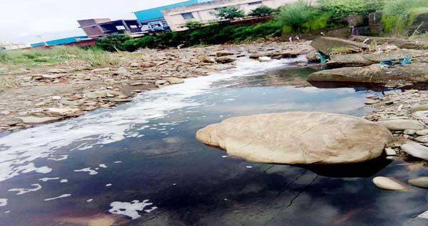 जहरीले पानी पीने से आठ मवेशियों की मौत, हिंदू संगठनों में दिखा रोष