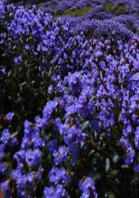 जिस फूल के जिक्र से पीएम नरेंद्र मोदी ने शुरू किया भाषण, जानें क्यों है वो खास