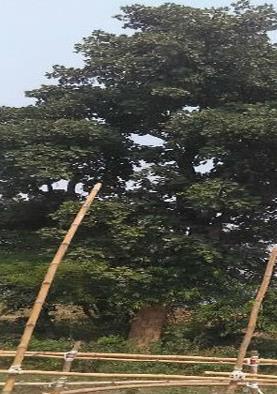 पेड़ से जुड़े अंधविश्वास के सामने PM के सुरक्षाकर्मियों ने भी मानी हार, जानिए पूरा मामला